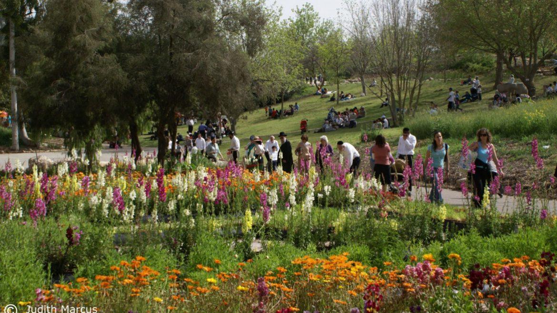 האב הגן הבוטאני – The JBG Hub, ירושלים